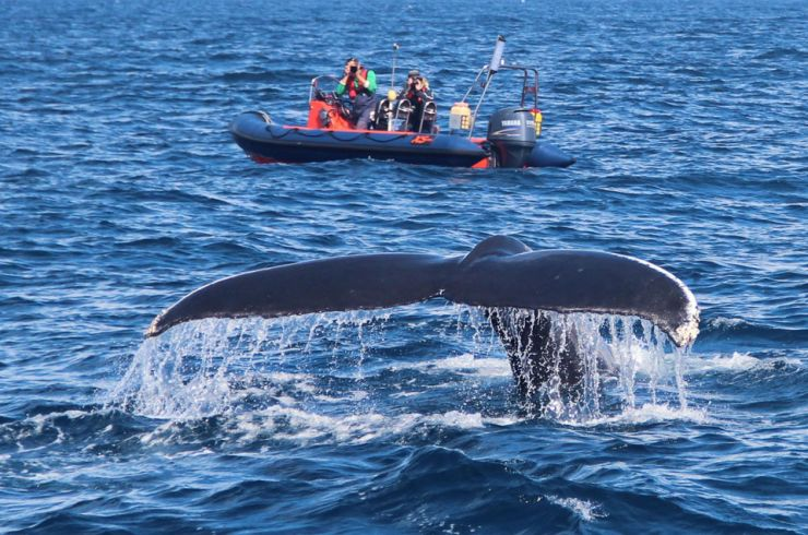 IWDG Welcomes another new whale to Ireland